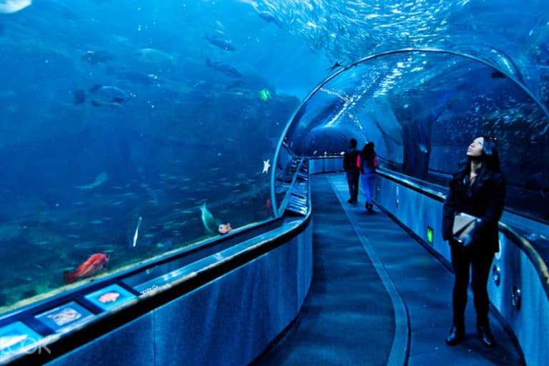 Best Aquariums to Visit in the World