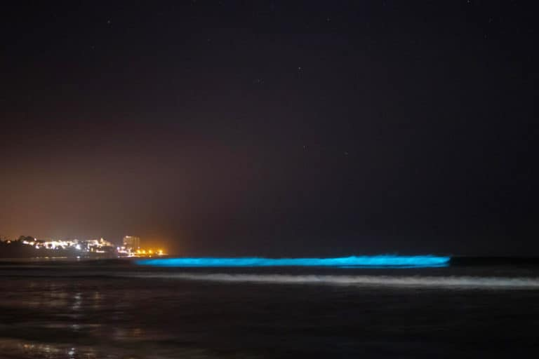 Why Were California's Beaches Bioluminescent?