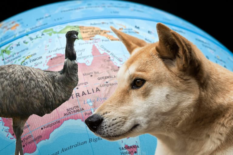 Know the Difference Between Australia and New Zealand